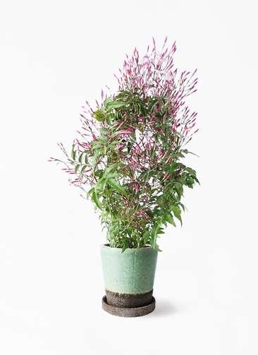 観葉植物 ハゴロモジャスミン 4号 ヴィフポット ミントグリーン 付き