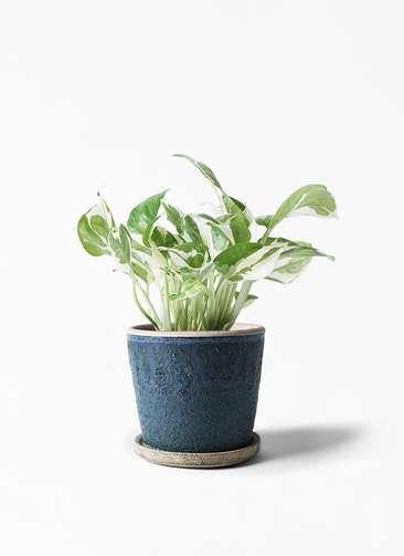 観葉植物 ポトス 3号 フェイバーポット ブルー 付き
