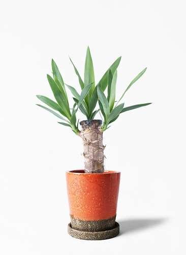 観葉植物 ユッカ 4号 ノーマル ヴィフポット オレンジ 付き