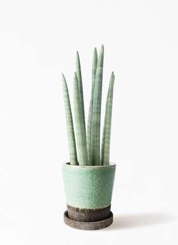 観葉植物 サンスベリア スタッキー 4号 ヴィフポット ミントグリーン 付き