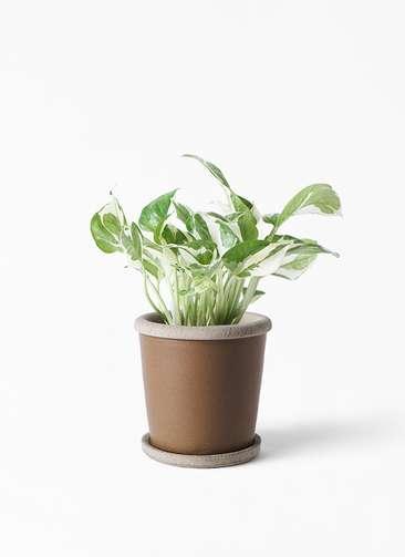 観葉植物 ポトス 3号 キャメルポット ブラウン 付き