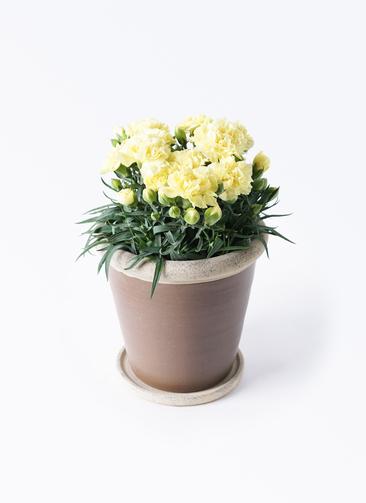 鉢花 カーネーション 5号 ハニームーン キャメルポット ブラウン 付き