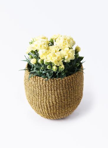 鉢花 カーネーション 5号 ハニームーン アバカバスケット オリーブ 付き
