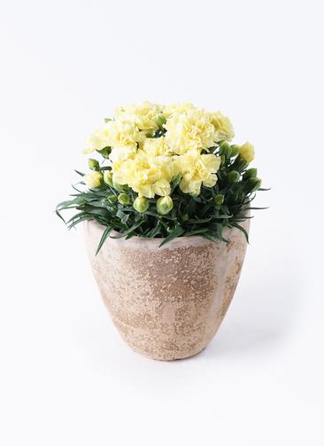 鉢花 カーネーション 5号 ハニームーン ルーガ アンティコ エッグ 付き