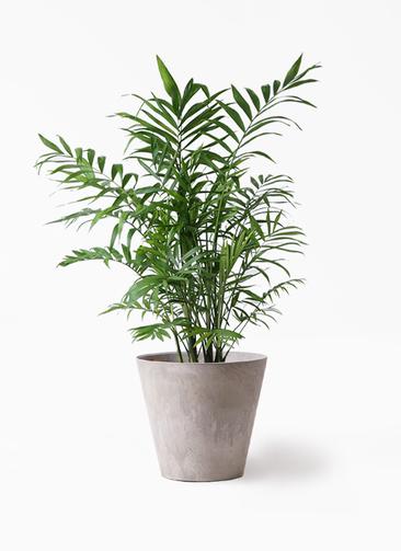 観葉植物 テーブルヤシ 7号 アートストーン ラウンド グレー 付き