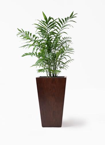 観葉植物 テーブルヤシ 7号 MOKU スクエア 付き
