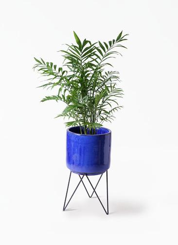 観葉植物 テーブルヤシ 7号 ビトロ エンデカ 鉢カバースタンド付 ブルー 付き