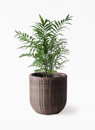 観葉植物 テーブルヤシ 7号 ウィッカーポットエッグ 茶 付き