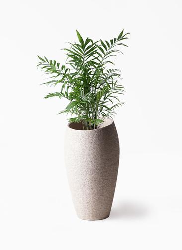 観葉植物 テーブルヤシ 7号 エコストーントールタイプ Light Gray 付き