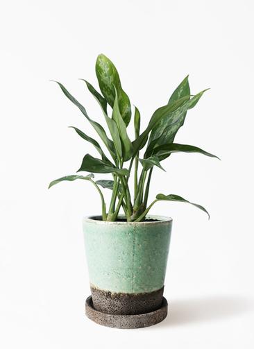 観葉植物 アグラオネマ 4号 ヴィフポット ミントグリーン 付き