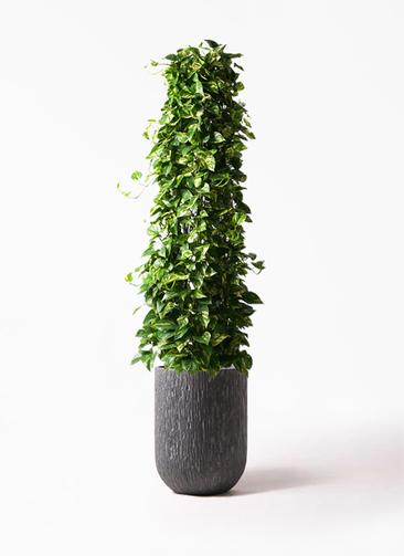 観葉植物 ポトス 10号 カルディナトールダークグレイ 付き