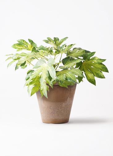 観葉植物 ヤツデ 7号 アートストーン ラウンド ベージュ 付き