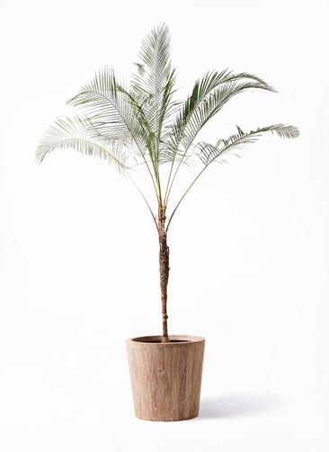 観葉植物 ヒメココス 10号 ウッドプランター 付き