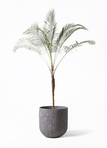 観葉植物 ヒメココス 10号 カルディナダークグレイ 付き