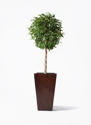 観葉植物 フィカス ベンジャミン 8号 玉造り MOKU スクエア 付き