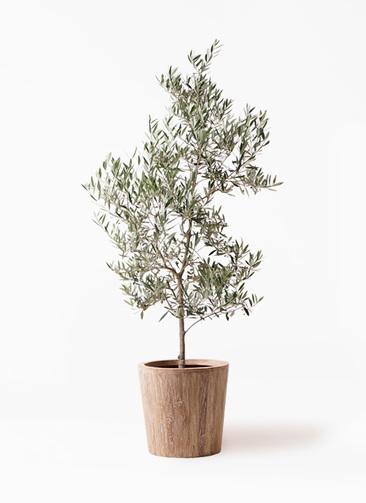 観葉植物 オリーブの木 10号 ピクアル ウッドプランター 付き