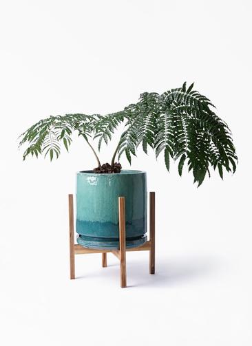 観葉植物 リュウビンタイ 8号 ビトロ エンデガ ターコイズ ウッドポットスタンド付き