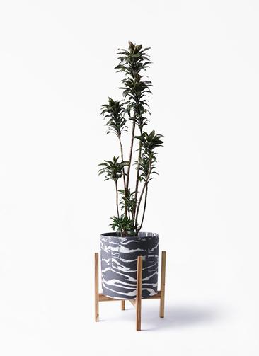 観葉植物 ドラセナ パープルコンパクタ 8号 ホルスト シリンダー マーブル ウッドポットスタンド付き