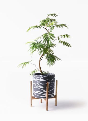 観葉植物 エバーフレッシュ 8号 曲り ホルスト シリンダー マーブル ウッドポットスタンド付き