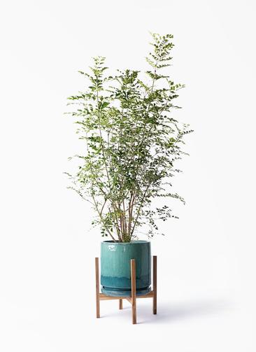観葉植物 シマトネリコ 8号 ビトロ エンデガ ターコイズ ウッドポットスタンド付き