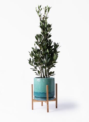 観葉植物 月桂樹 8号 ビトロ エンデガ ターコイズ ウッドポットスタンド付き