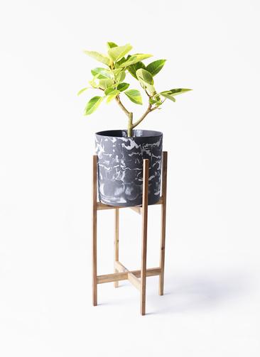 観葉植物 フィカス アルテシーマ 6号 ストレート ホルスト シリンダー マーブル ウッドポットスタンド付き
