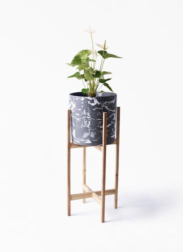 観葉植物 アンスリウム 6号 スミ ホルスト シリンダー マーブル ウッドポットスタンド付き