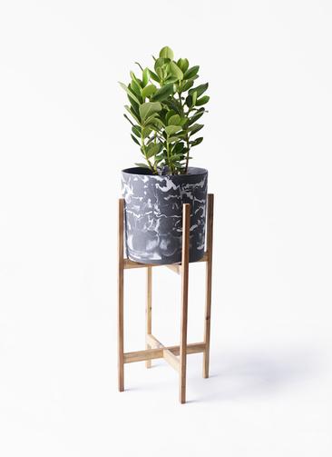 観葉植物 クルシア ロゼア プリンセス 6号 ホルスト シリンダー マーブル ウッドポットスタンド付き