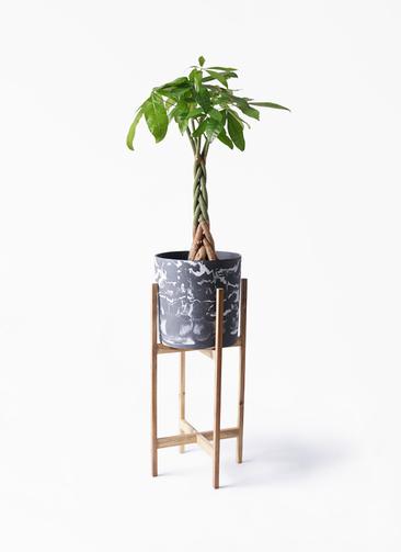 観葉植物 パキラ 6号 ねじり ホルスト シリンダー マーブル ウッドポットスタンド付き