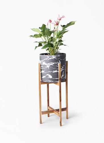 観葉植物 アンスリウム 6号 ホルスト シリンダー マーブル ウッドポットスタンド付き