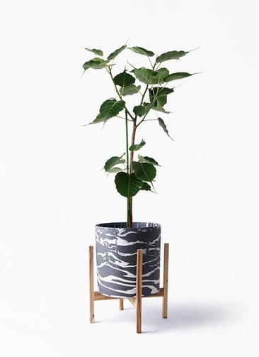 観葉植物 インドボダイジュ 8号 ホルスト シリンダー マーブル ウッドポットスタンド付き