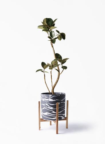 観葉植物 フィカス バーガンディ 8号 ホルスト シリンダー マーブル ウッドポットスタンド付き