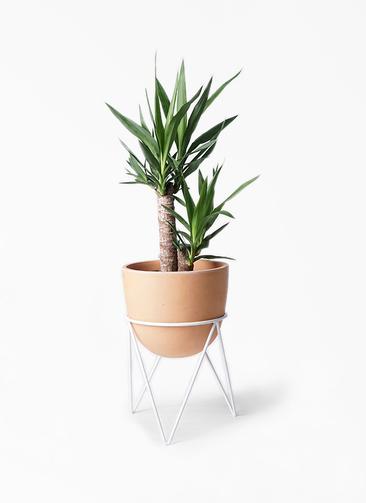 観葉植物 ユッカ 6号 ノーマル インティ ラウンド アイアンポットスタンド ホワイト付き