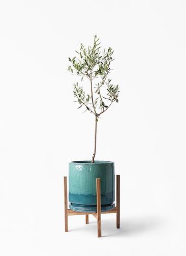 観葉植物 オリーブの木 8号 カラマタ ビトロ エンデガ ターコイズ ウッドポットスタンド付き