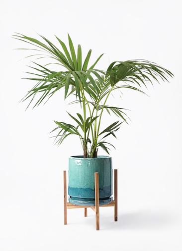 観葉植物 ケンチャヤシ 8号 ビトロ エンデガ ターコイズ ウッドポットスタンド付き
