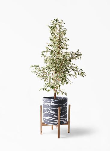 観葉植物 フィカス ベンジャミン 8号 スターライト ホルスト シリンダー マーブル ウッドポットスタンド付き