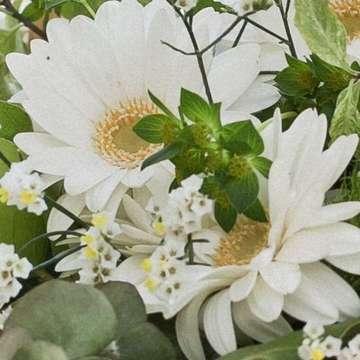 ガーベラ アレンジメント 白(ホワイト)