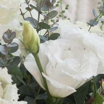 トルコキキョウ アレンジメント 白(ホワイト)