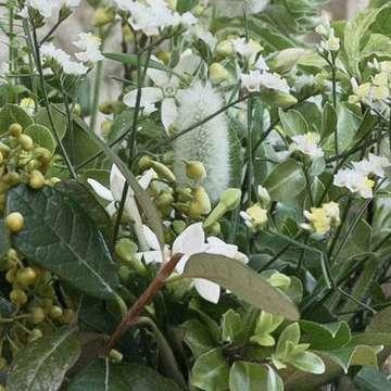 草花系 アレンジメント 白(ホワイト)