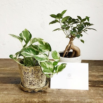 観葉植物の実物写真
