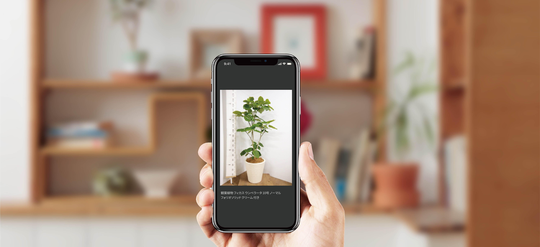 実物写真 - 国内最大級の胡蝶蘭・観葉植物通販サイト