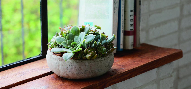 寄せ植え - 国内最大級の胡蝶蘭・観葉植物通販サイト