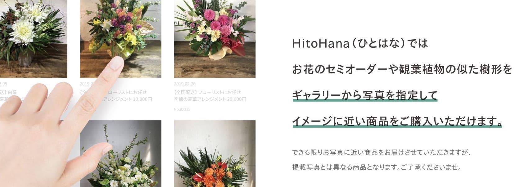 お祝い ギャラリー写真 - お花と植物のギフト通販 HitoHana(ひとはな)