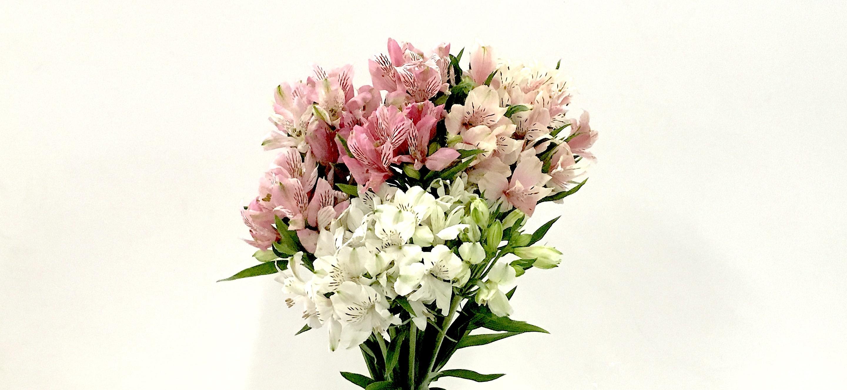 アルストロメリア - お花と植物のギフト通販 HitoHana(ひとはな)