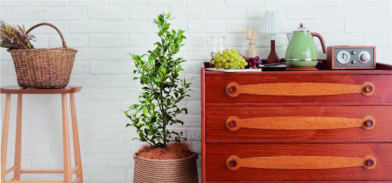 果樹 - お花と植物のギフト通販 HitoHana(ひとはな)