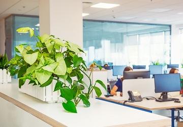 観葉植物 オフィス